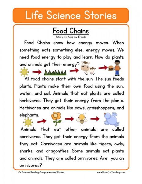 Food Webs And Food Chains Worksheet 017 - Food Webs And Food Chains Worksheet