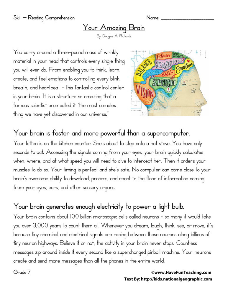 Your Amazing Brain
